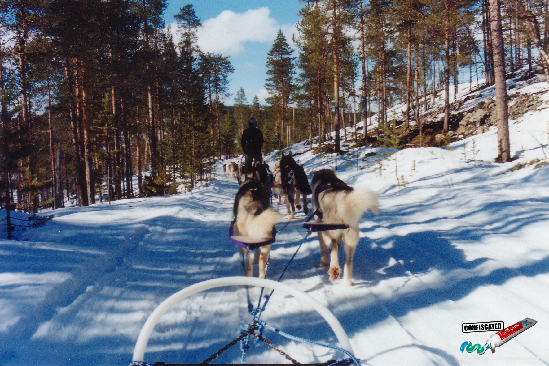 Dogsledding in Finnish Lapland