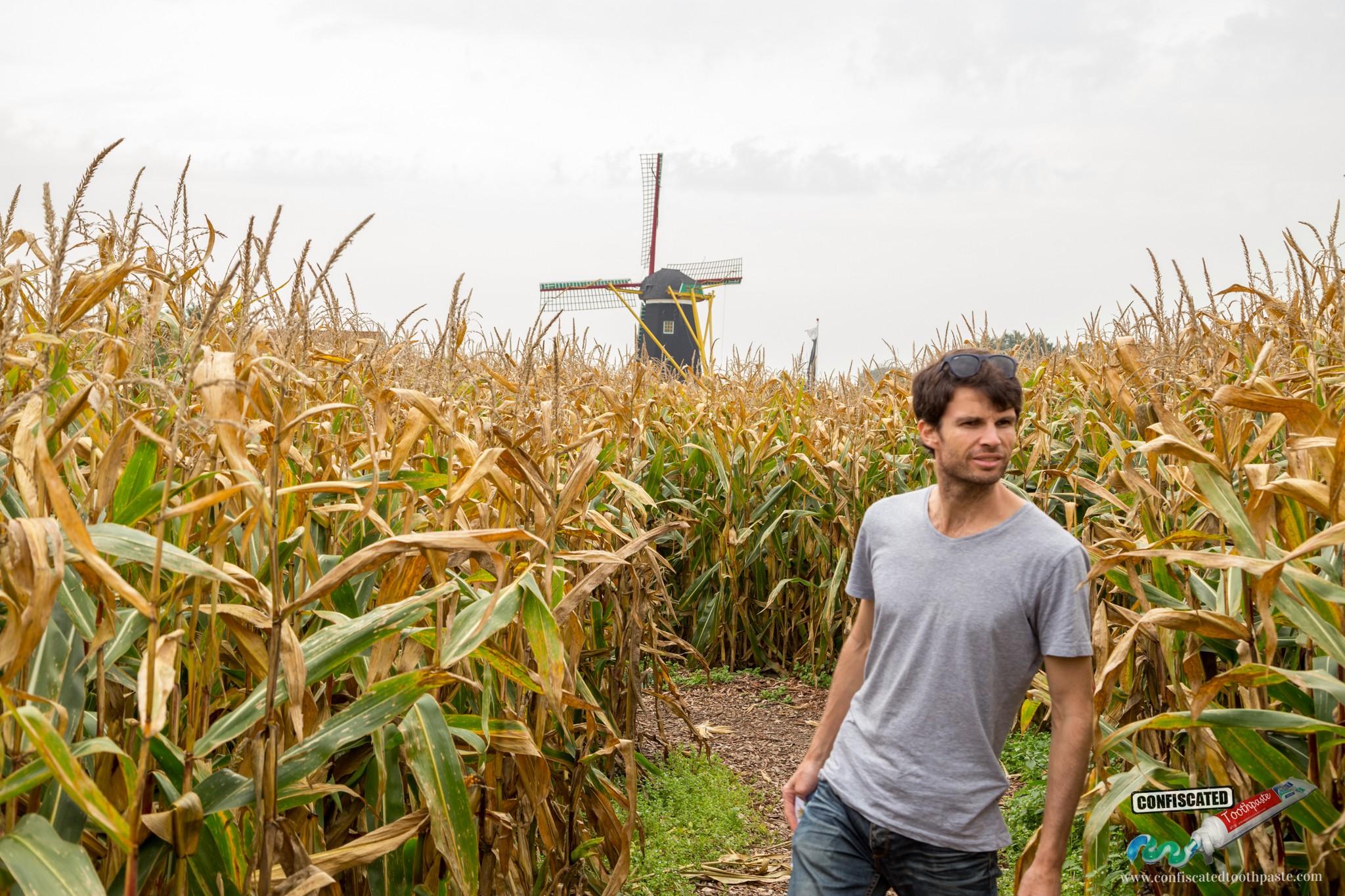 Lost in a Dutch cornfield